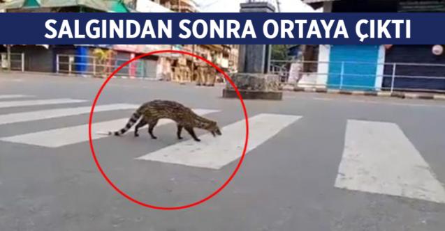 Koronavirüs nedeniyle sokağa çıkma yasağının uygulandığı Hindistan ...